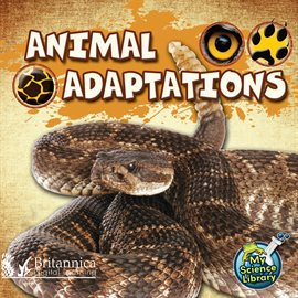 Cover image for Animal Adaptations