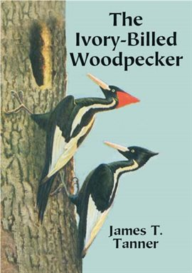 Cover image for The Ivory-Billed Woodpecker