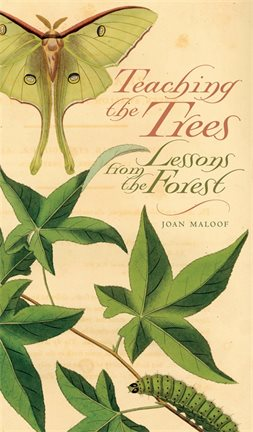 Teaching the Trees Book Cover