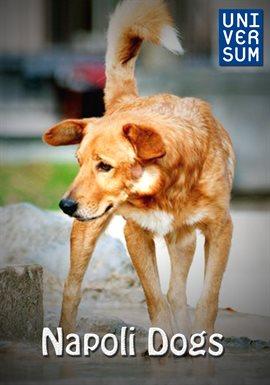 Napoli Dogs /