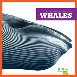 Cover image for Whales