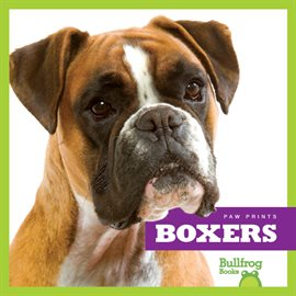 Cover image for Boxers