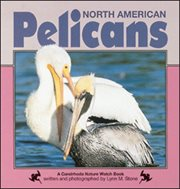 North American Pelicans