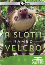 A Sloth Named Velcro