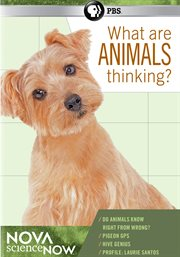 What Are Animals Thinking?