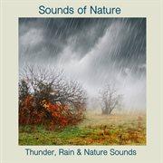 Thunder, Rain & Nature Sounds
