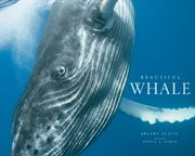 Beautiful whale cover image