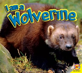 Cover image for Wolverine